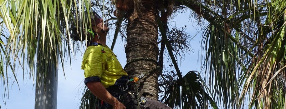 https://treeworks.net.au/wp-content/uploads/2015/07/Palm-de-fronding-Sydney-Airport-e1437535553753.jpg