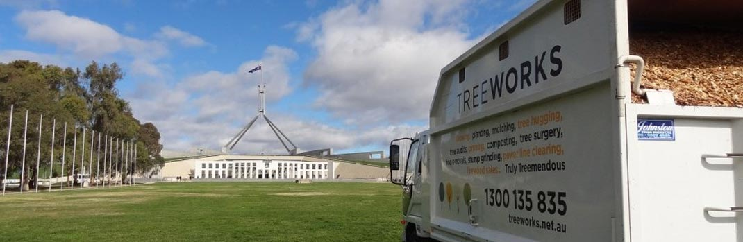 commercial tree removal at parliament house